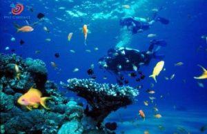 Lặn biển tại Cebu