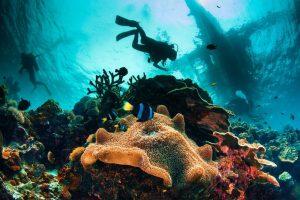 Lặn biển ngắm san hô - du học hè Philippines
